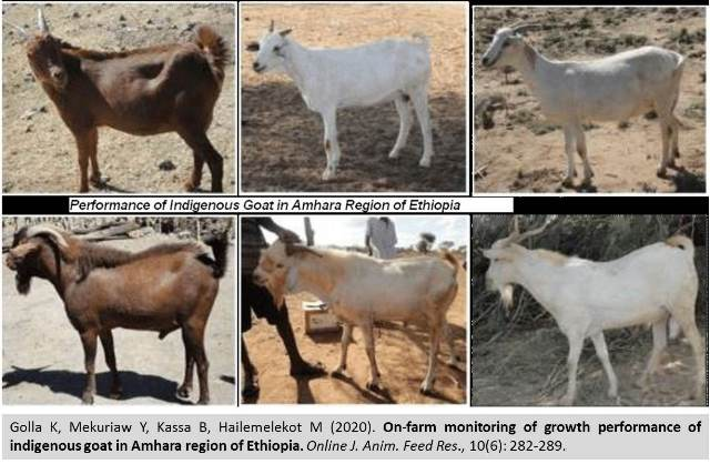 1199A-performance_of_indigenous_goat_in_Ethiopia--